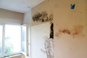 Damp and Mould Problems London
