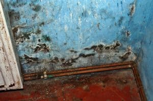 How to Fix Rising Damp in London