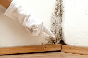 Identify Rising Damp Problems London