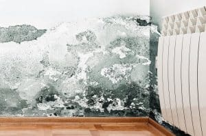 London Rising Damp Treatment Options