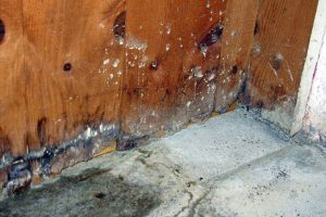 Damp & Timber Treatment in London